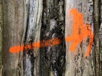 orange_8909