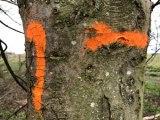 orange_8916