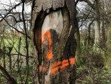 orange_8921