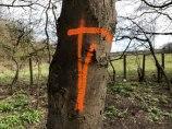 orange_8922