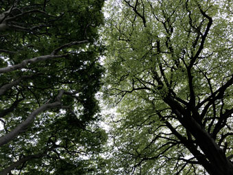 tree_0451