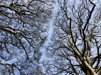 tree_9426