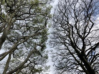 tree_9531