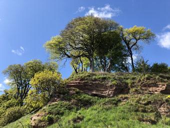 tree_9716