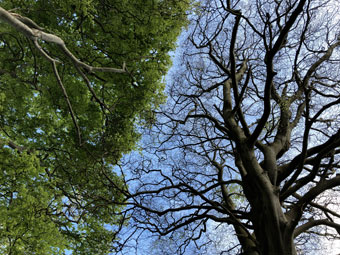 tree_9866
