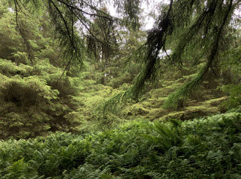 forest_1273
