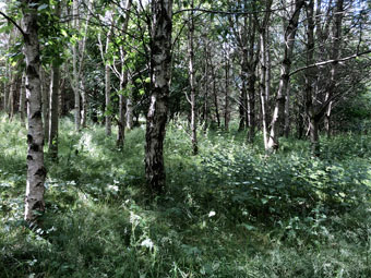 forest_1307